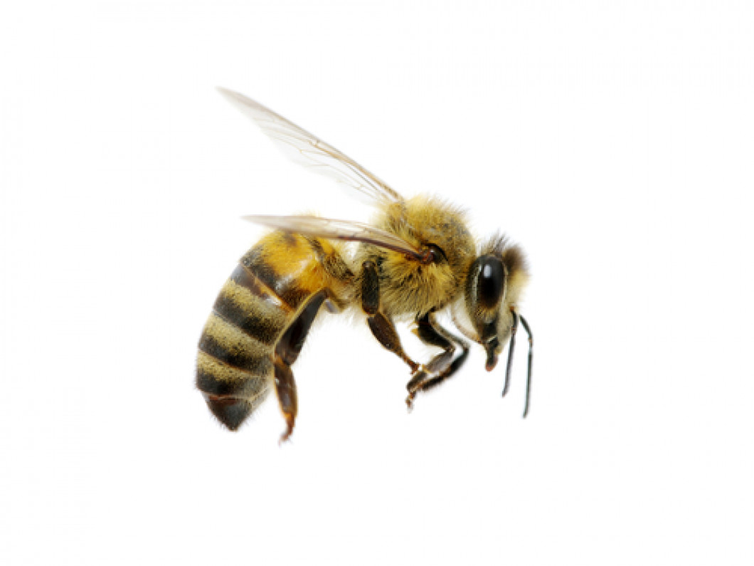Tell Bees and Wasps to Buzz Off